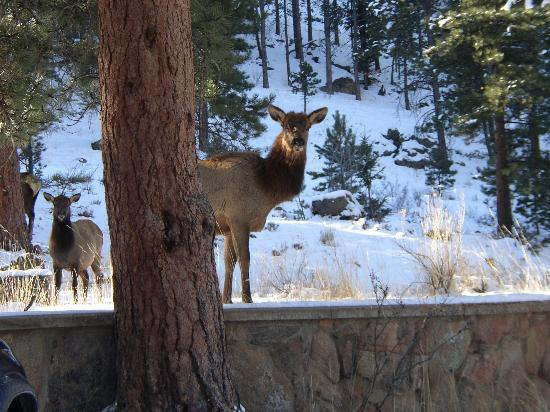 Romantic Riversong Bed and Breakfast Inn: I Hope the Elk Have a Reservation!