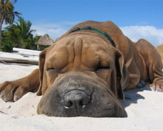Seven Seas Resort: what dogs do in san pedro