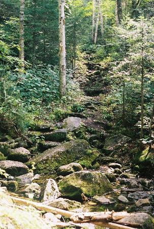 Goose Eye Mountain: Trail to Carlo Col