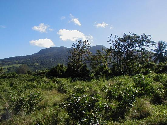 Basseterre, St. Kitts: On the way to the rainforest