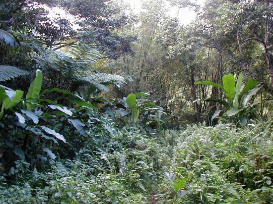 Basseterre, St. Kitts: Lots of vegetation
