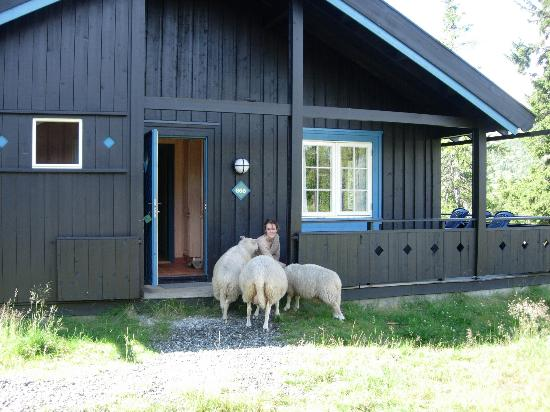Gala, Norwegia: Our cabin and friendly sheep