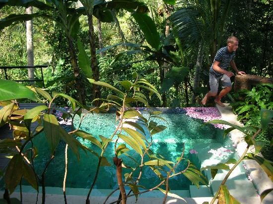 COMO Uma Ubud : Plunge Pool-Very shaded by trees making the water a little chilly