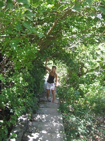 Petit St. Vincent Resort: One path leading to the beach
