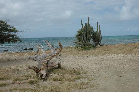 Bucuti & Tara Beach Resort Aruba: Shoreline Near Lightouse