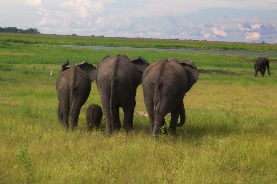 Chobe National Park, Botswana : Elephant Walk