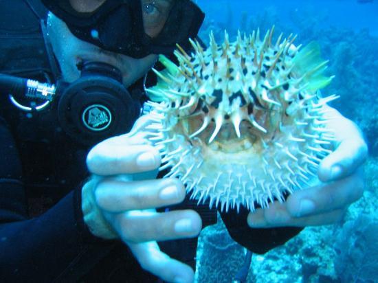 Isla Marisol Resort : Chad and a pufferfish