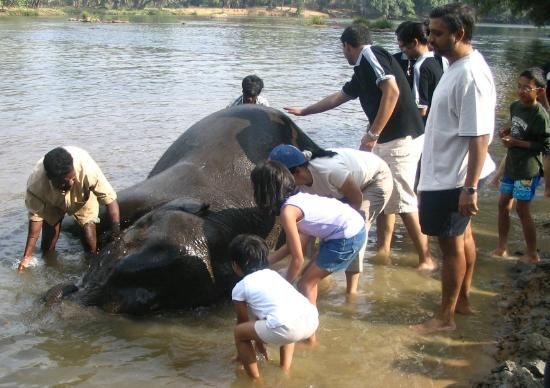 Evolve Back, Coorg : Visit a nearby elephant 'resort' and bathe the elephants!