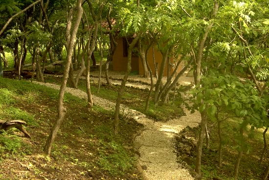 Panacea de la Montana Yoga Retreat & Spa: Paths to the cabinas