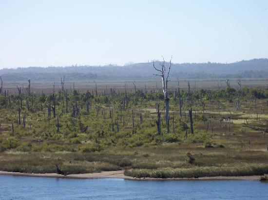 Isla de Chiloé, Chile: Dead Tree Valley