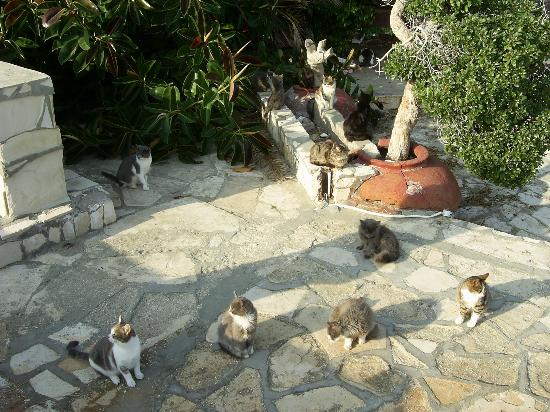Atlantica Oasis Hotel: The cats