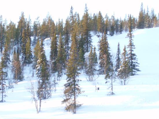 Lapland Hotel Saaga: View from balcony