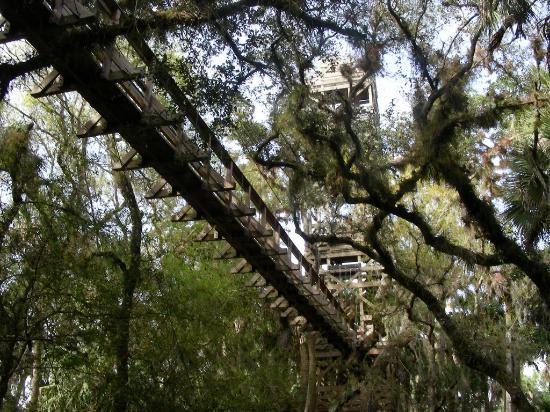 Sarasota, FL: Canopy Walk
