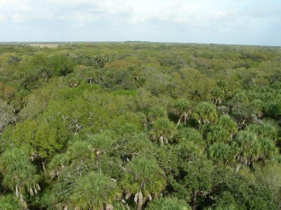 Myakka River State Park: View from Canopy Tower