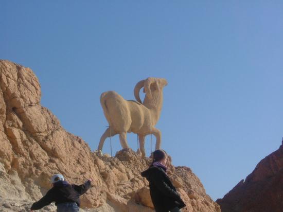 IBEROSTAR Diar El Andalous: A goat calved into the Atlas mountains