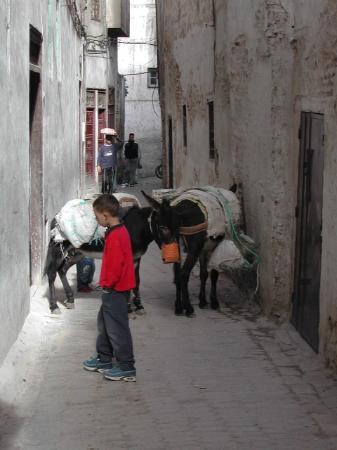 Fez, Marrocos: Donkey jam in Fes