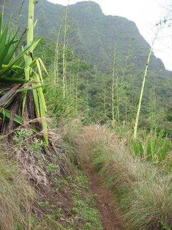 Kalalau Trail: Typical Trail through upland vegetation