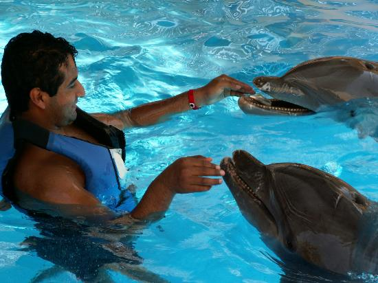 Calinda Beach Acapulco: swimming with the dolphins