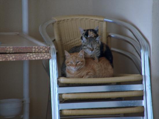 Melas Resort Hotel: The pool cats