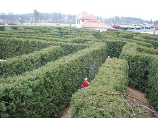 Shadow Mountain Escape: The Garden Maze