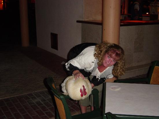 Iberostar Dominicana Hotel: George the Rooster