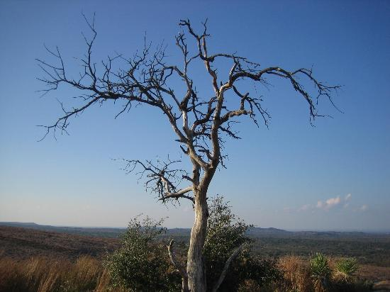 Enchanted Rock State Natural Area: Lonely Tree at the top