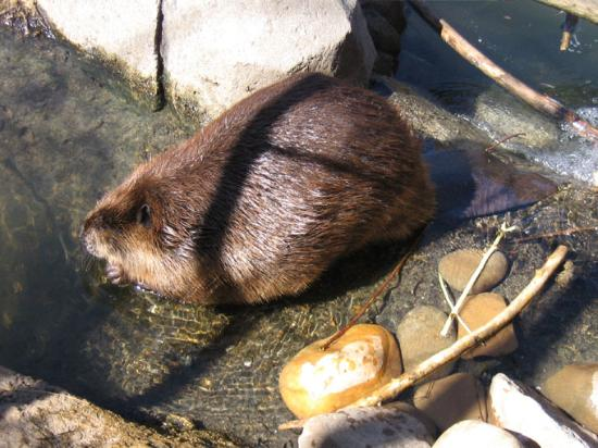 Knoxville, TN: This is the beaver exhibit in KIDS COVE.