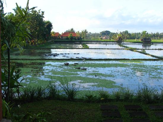 Tegal Sari: View from patio