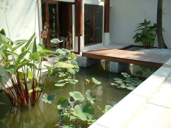 SALA Samui Choengmon Beach Resort: Entrance to Library - Carp Pond