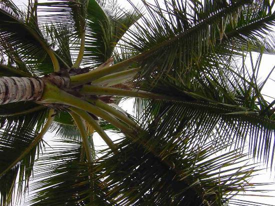 Hotel Molokai: View from one of many hammocks