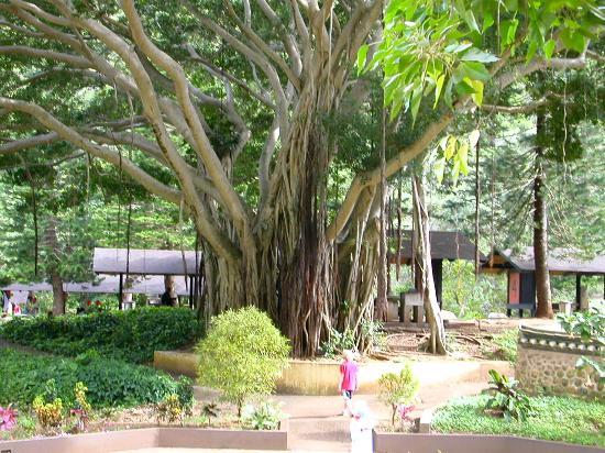 Heritage Gardens Picture Of Maui Hawaii Tripadvisor