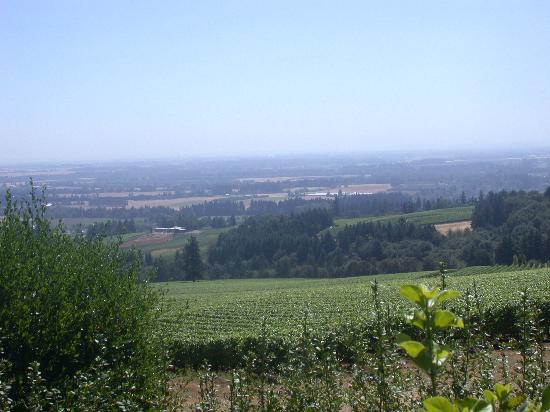 Willamette Valley : View From Domaine  Drouhin Vineyards