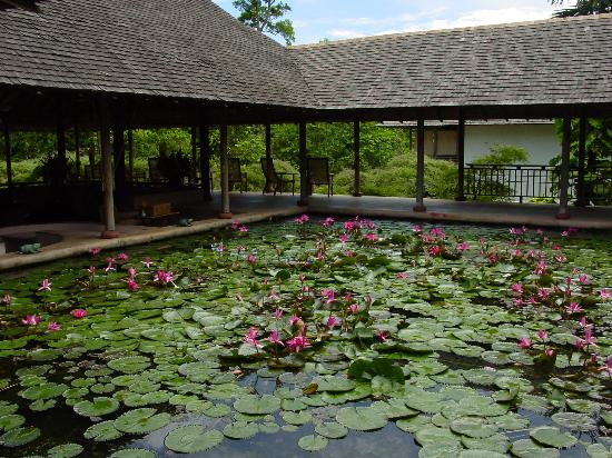 The Datai Langkawi: Lobby lily pond