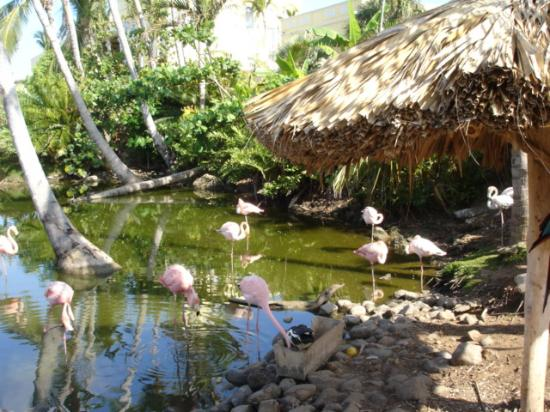 Excellence Punta Cana: flamingos...take bread to feed them, the loved it