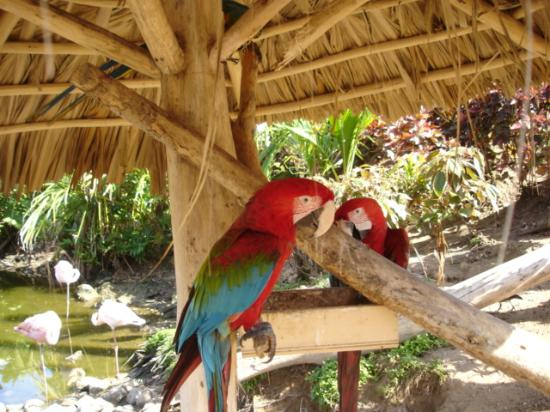 Excellence Punta Cana: parrot