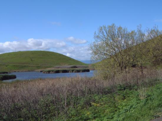 Фремонт, Калифорния: water and reeds