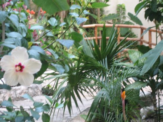 Luna Blue Hotel: Luna Blue Garden