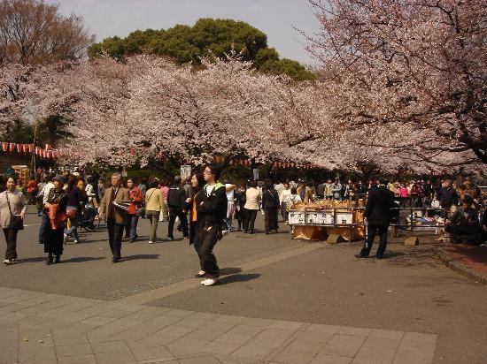 สวนอุเอโนะ: Cherry blossom sightseers
