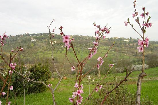 Villa Poggio ai Merli : Spring blossoms at the villa