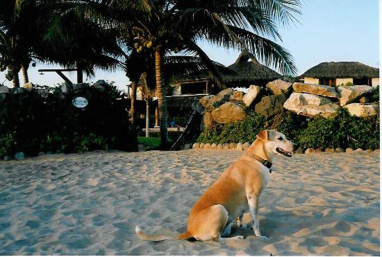 Las Palmas Beachfront Villas: Paloma... sweet girl