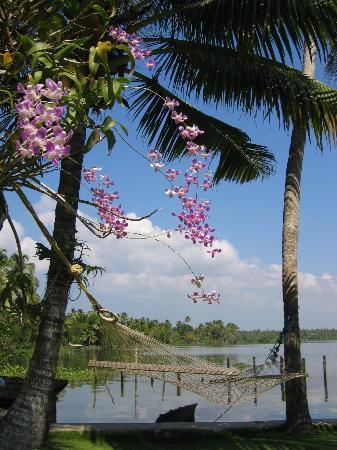 Kayaloram Heritage Lake Resort : hammock with amazing view
