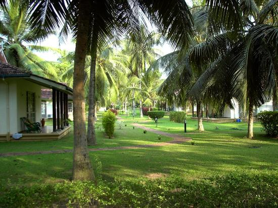 Tamarind Tree Hotel: Cottages and grounds