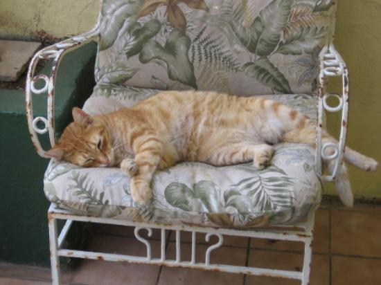 Miller Manor Guest House: Homer the Hotel Cat