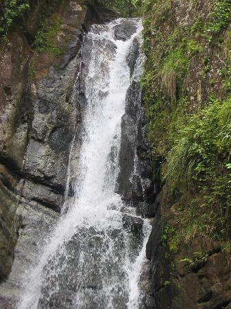 El Yunque Nationalwald, Puerto Rico: Just the Waterfall