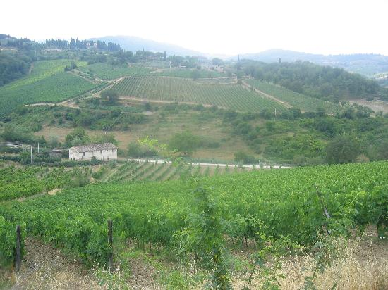 Fattoria Poggiarelli: The View from the Terrace