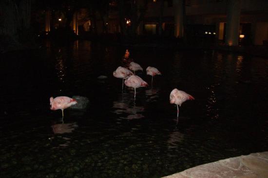 Westin Maui Resort And Spa: Lobby at night - Flamingos