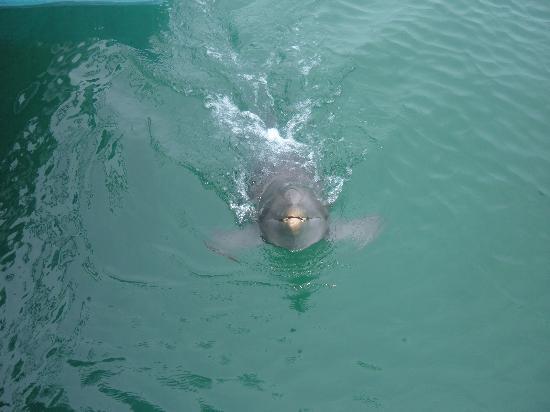 Puerto Plata Village Resort: dolphin