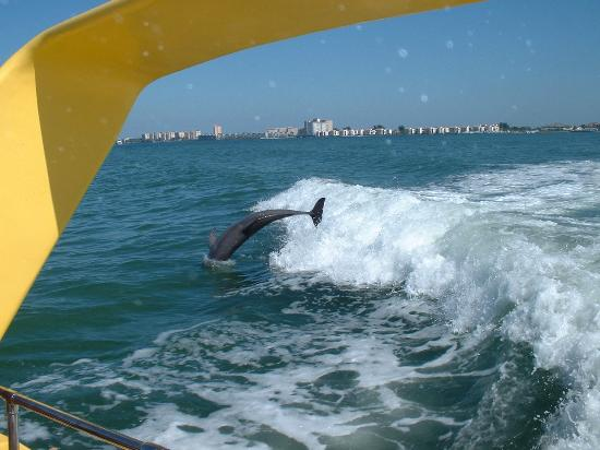 Alden Suites: Awesome Local Dolphin Cruise