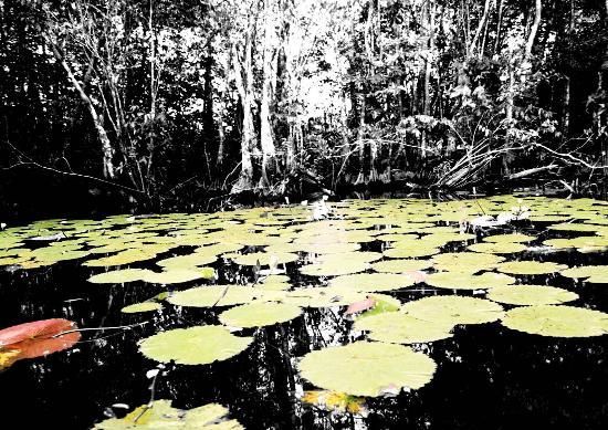 Amatique Bay Resort & Marina: Lago Izabal near Puerto Barrios, a tourist paradise