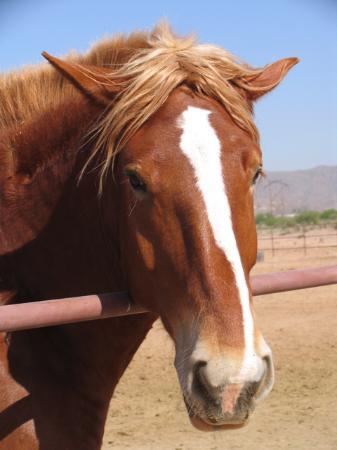 Sheraton Grand at Wild Horse Pass Foto
